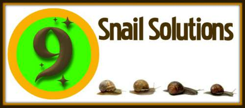 Snail Solutions